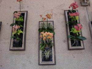 中庭の壁面プランター