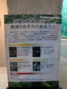 沖縄の絶滅危惧種