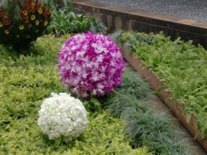 ランの花のボール