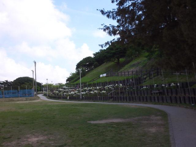 大石公園のゆり